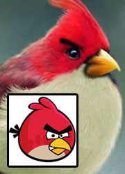 Angry-Birds_pq